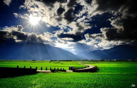 Картинки дорога, зелень, поле, трава