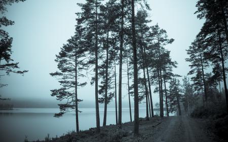 Фотографии дорога, деревья, река, пейзаж