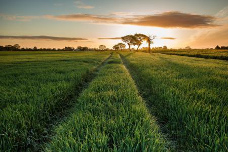 Картинки поле, восход, утро, природа