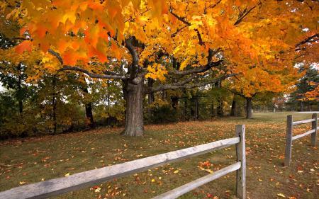 Картинки дерево, осень, забор
