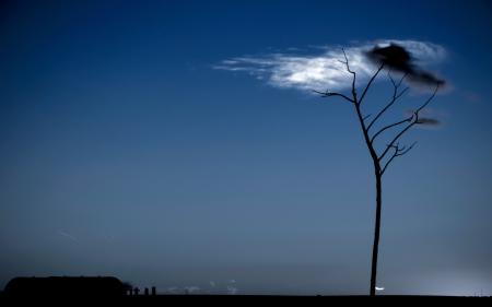 Заставки небо, дерево, облако, пейзаж