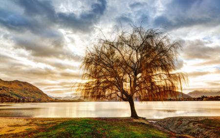Картинки дерево, озеро, горы, небо
