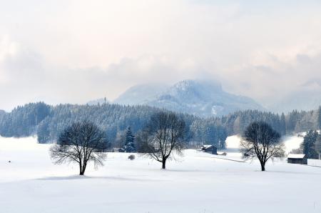 Заставки горы, облака, лес, деревья