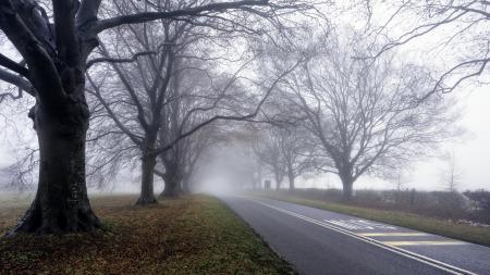 Картинки дорога, деревья, туман, утро