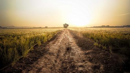 Фотографии дорога, поле, закат, пейзаж