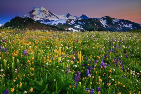 Обои Mount Baker, Washington, вулкан Бейкер, Вашингтон