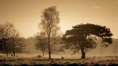 Фотографии утро, поле, туман, пейзаж