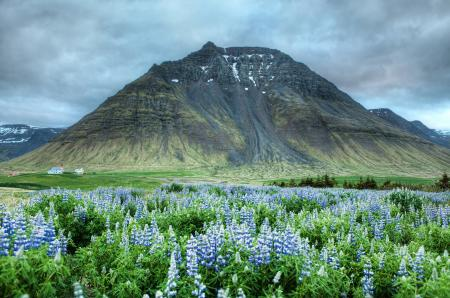 Картинки гора, цветы, долина