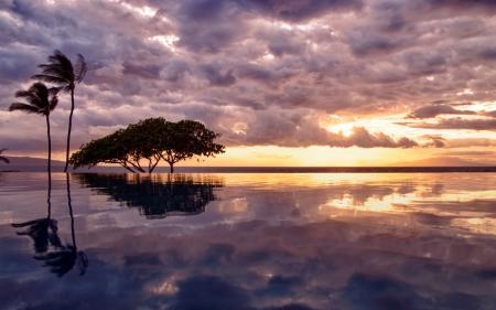 Заставки пальмы, отражение, вода, бассейн
