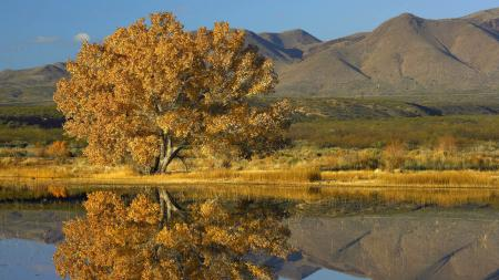 Обои Горы, дерево, осень, озеро