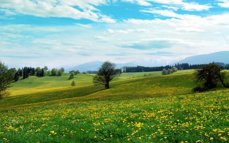 Заставки пейзажи, landscape, простор, поляна