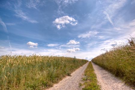 Фото небо, дорога, поле, урожай