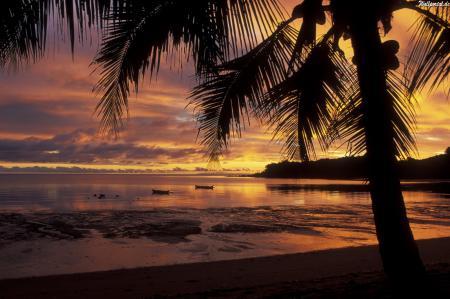 Обои Закат, пальма, остров
