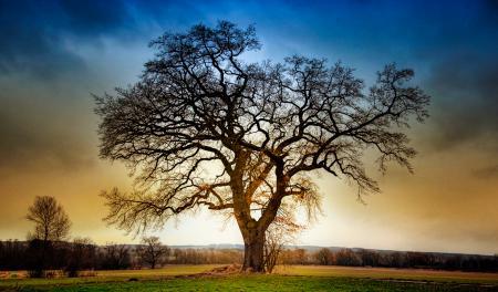 Обои дерево, поле, небо