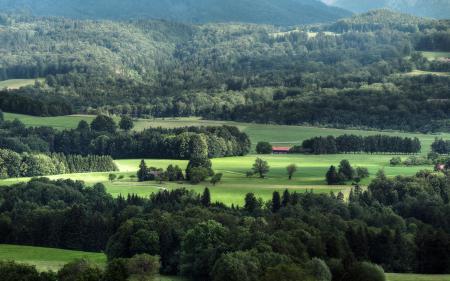 Картинки леса, долина, зелень