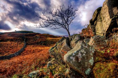 Заставки природа, камни, дерево, поле