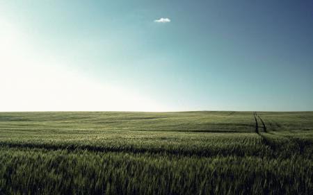 Фото луг, небо, трава, солнечный_день
