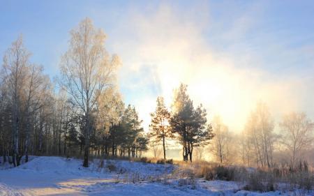 Фото зима, утро, снег, деревья