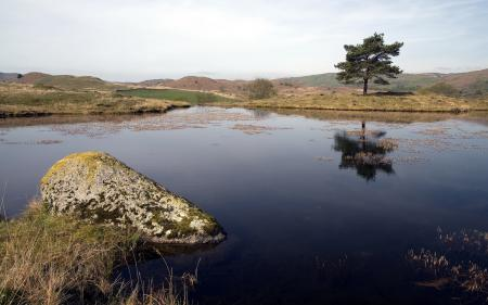 Фото озеро, дерево, природа, пейзаж