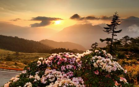 Заставки закат, небо, горы, цветы