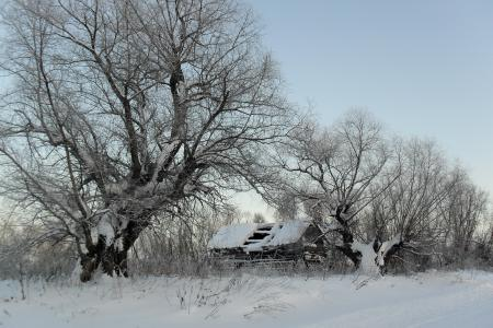Фотографии зима, снег, дом, дерево