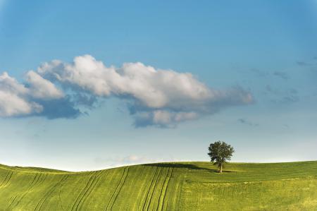 Обои небо, облака, поля, ковры