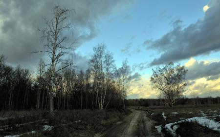 Фото весна, дорога, деревья, природа