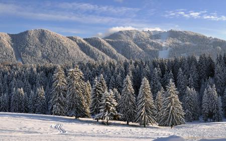 Фотографии зима, снег, горы, деревья