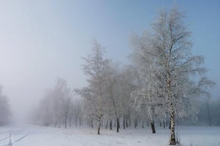 Заставки зима, берёзы, снег