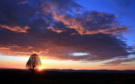 Фото небо, закат, дерево, пейзаж