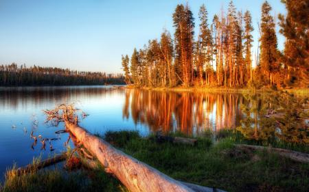 Фотографии озеро, дерево, природа, пейзаж