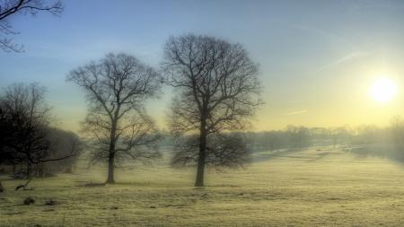 Фото утро, туман, поле, деревья