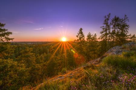 Обои деревья, закат, лес, природа