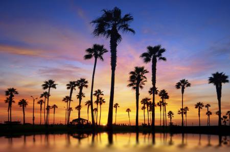 Фотографии пейзаж, закат, пальмы, солнце