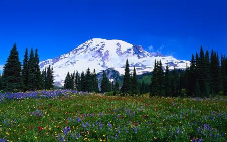 Фото гора, цветы, елки