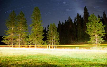 Фото ночь, дорога, деревья, свет
