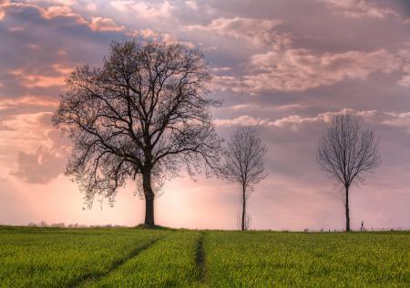 Фото весна, поле, деревья, небо