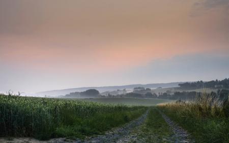 Обои поле, дорога, туман, природа