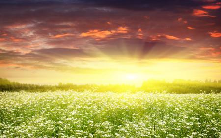 Картинки пейзаж, природа, солнце, поляна