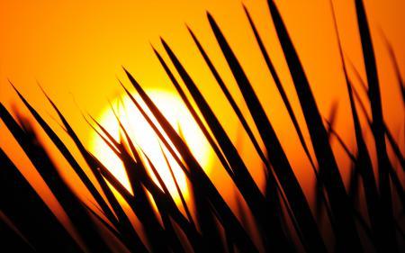 Фото закат, куст, иголки, листки