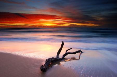 Обои море, закат, пляж, ветка