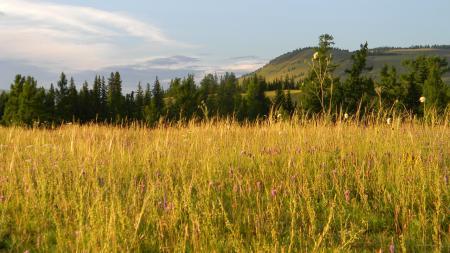 Заставки поле, трава, горный