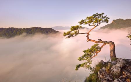 Заставки рассвет, утро, туман, дерево