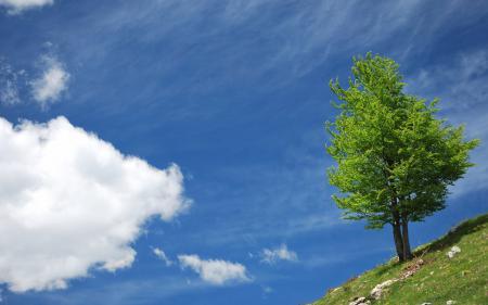Фото небо, облака, дерево, холм