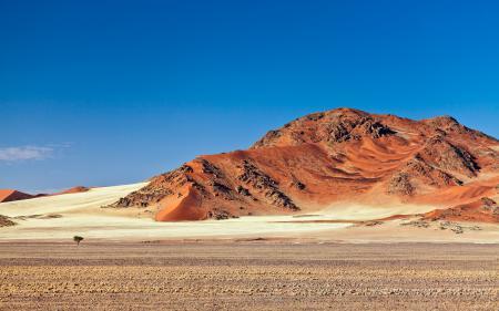 Обои пустыня, горы, песок, дерево