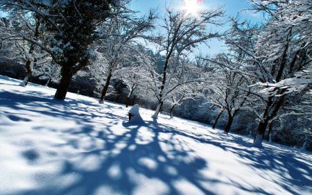 Фото зима, снег, искрится, мороз