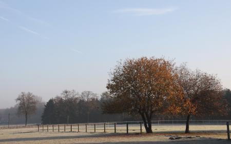 Обои поле, забор, деревья