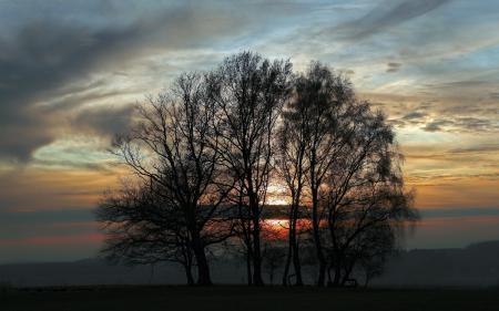 Фото закат, деревья, небо, пейзаж