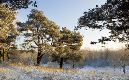 Фотографии зима, деревья, природа, пейзаж