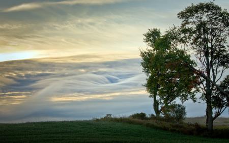 Фото утро, поле, деревья, пейзаж